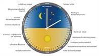 Ändert sich die innere Uhr des Menschen in Schwerelosigkeit?